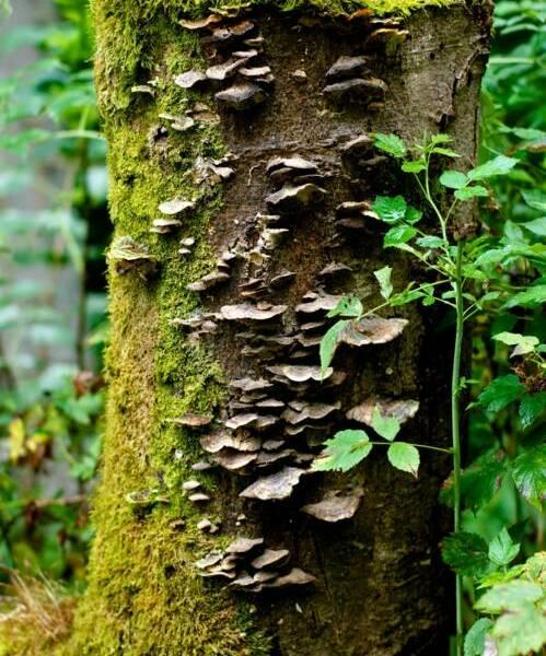 Urban Jungle: Hike nature near the airport / 23 km, 6 h + breaks