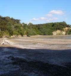 Kendall Bay / Kauri Point Centennial Park