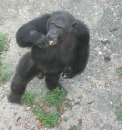 Abidjan Zoo
