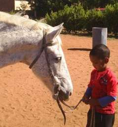 MIRACLESSUDAN Riding Centre