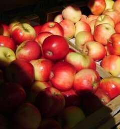 Bauernmarkt Konstablerwache
