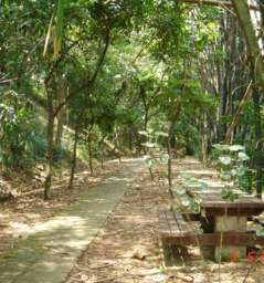 Bukit Nanas - Forest Reserve
